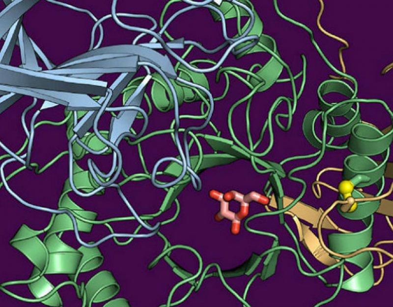 Structure of human galactocerebrosidase (GALC) gene