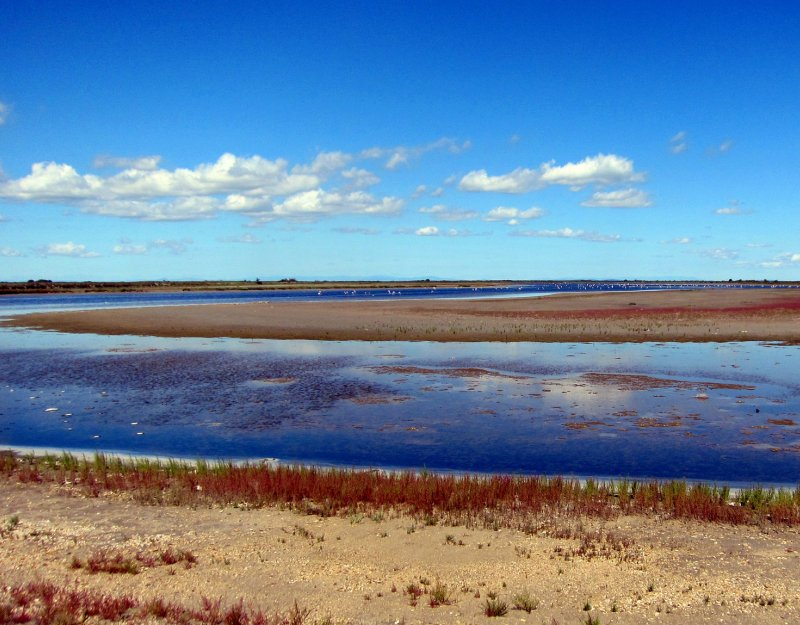 The wetlands of the Camargue, France. Image copyright Josef Grunig and used under a Creative Commons licence