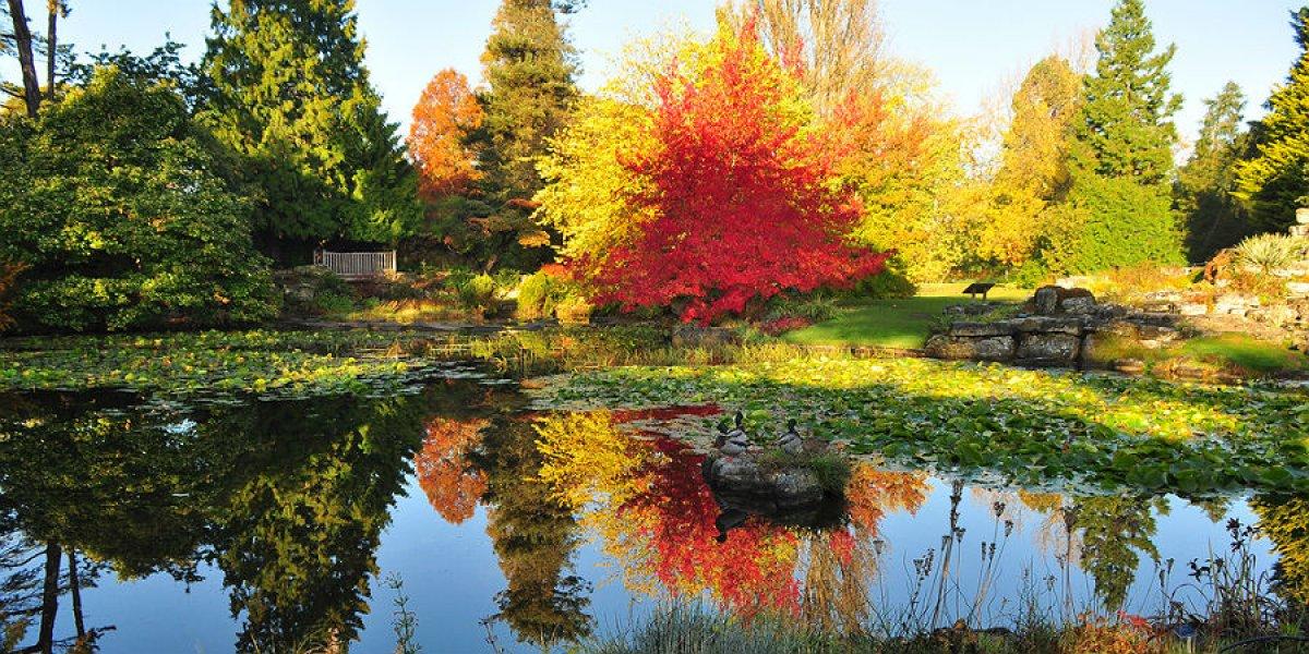 Autumn colour at the Botanic Garden