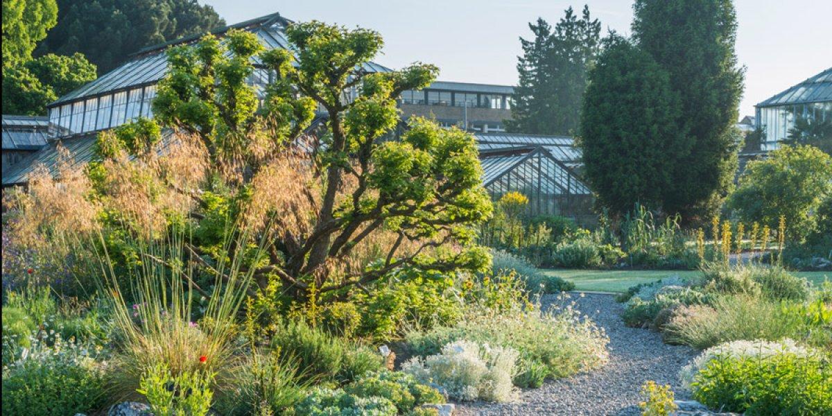 The Mediterranean beds at Cambridge University Botanic Garden