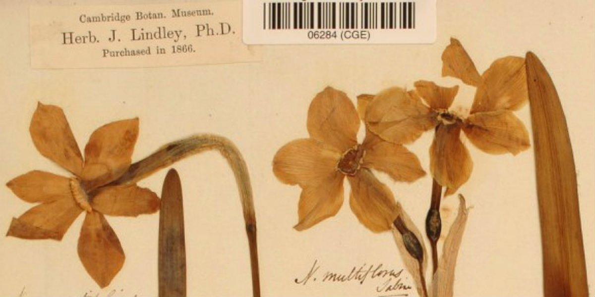 Lindley collection specimen