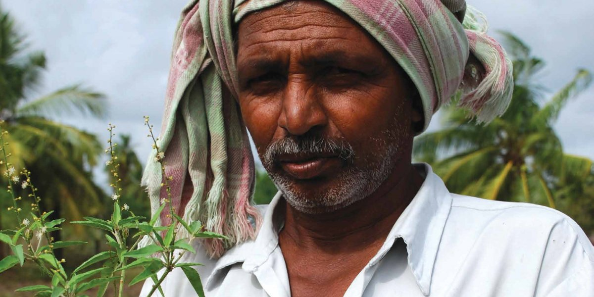 Indian farmer holding a small seedling
