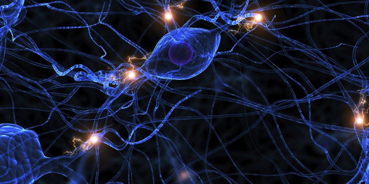 Illustration of a nerve cell
