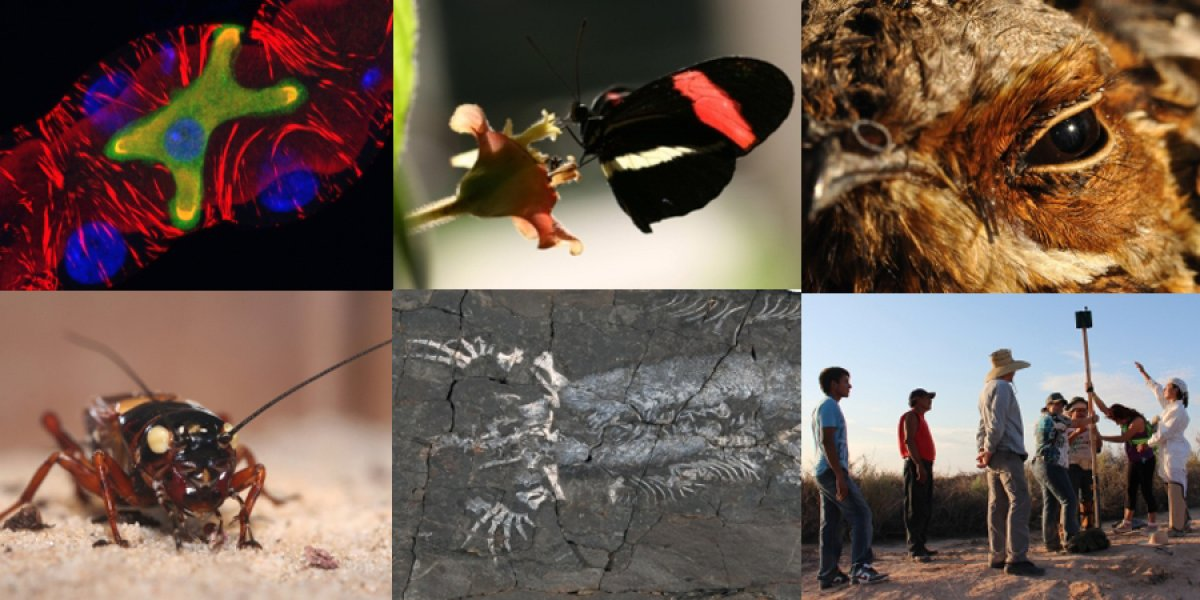 Montage of different zoology images